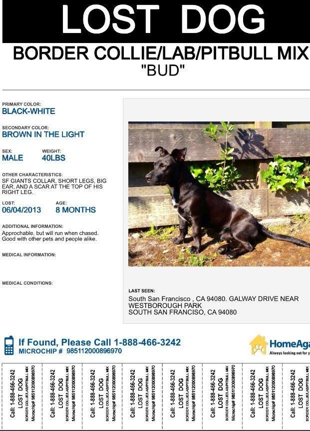 BUD Missing Dog Jun 4 2013